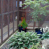 Attractive courtyard at Woodlands Cattery